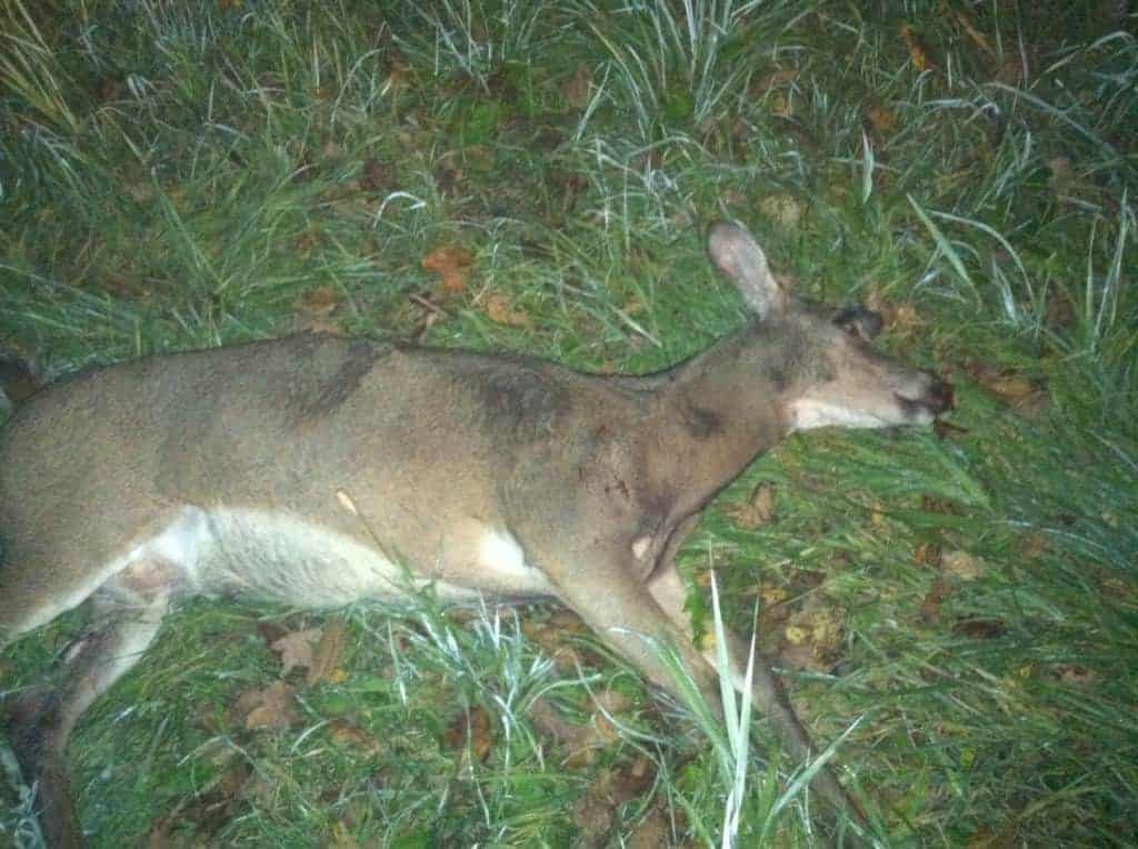 Road Kill Doe