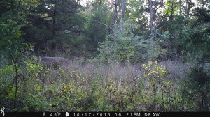 The big 9 pt in the daylight