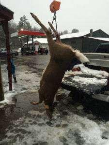 2014 NH Archery Doe