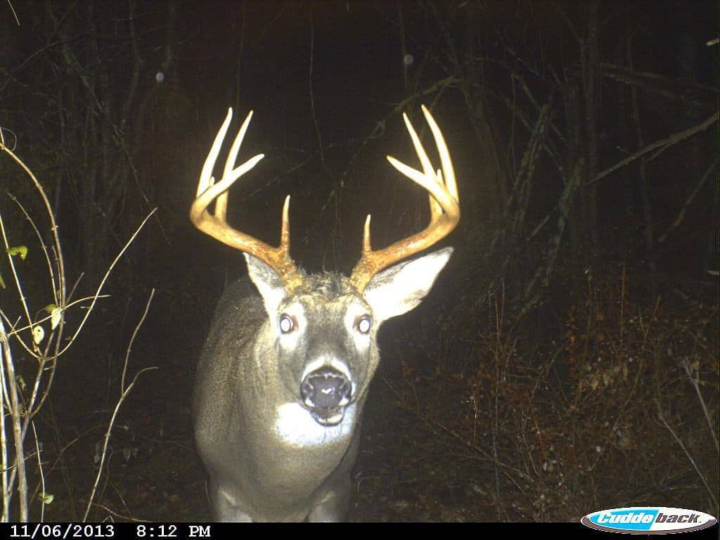 New Hampshire Buck, Hunting