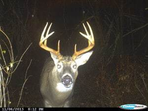 New Hampshire Buck, Hunting