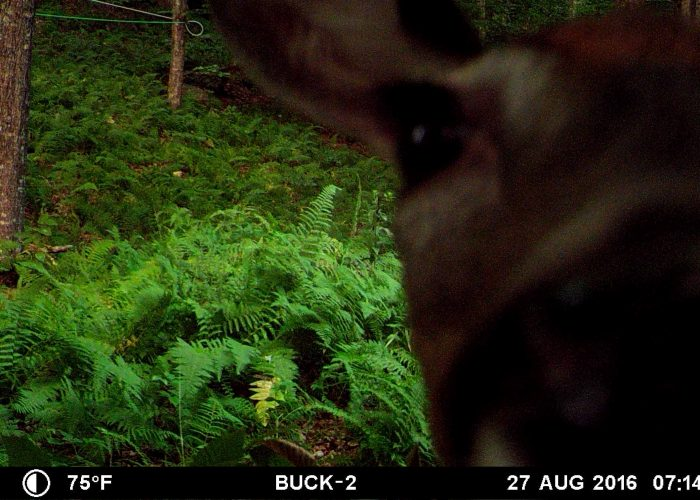 4PT16.7 – A Feathered Foe And Whitetail Doe