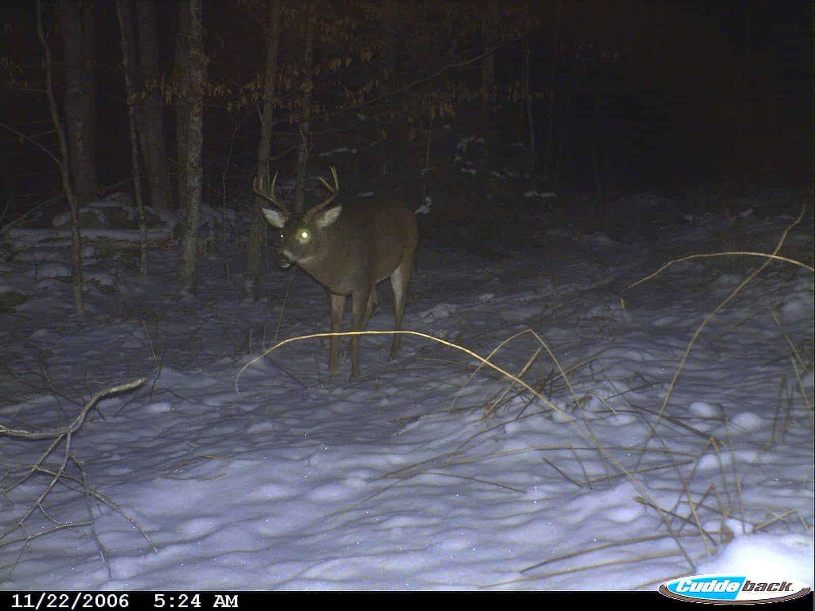 Vermont Buck