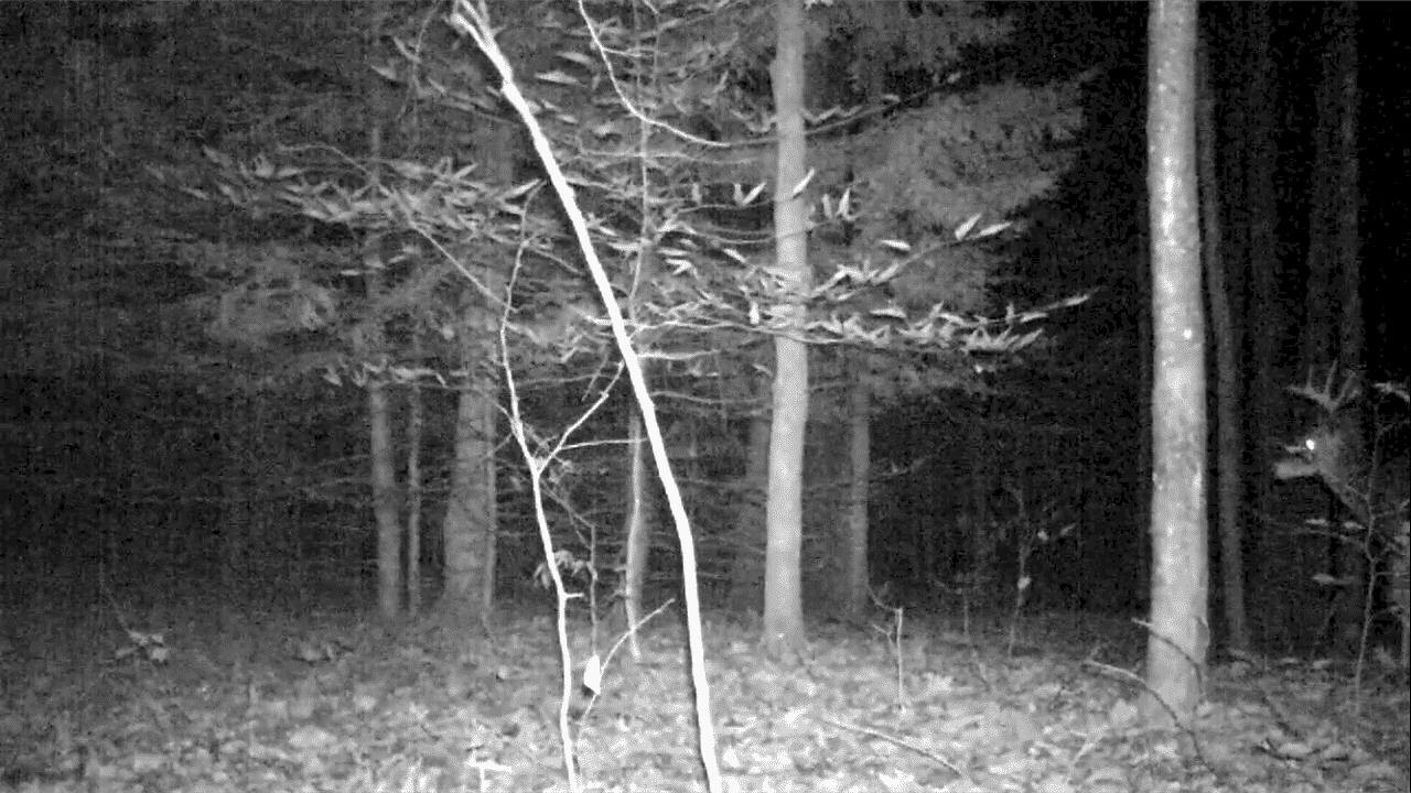 Big New Hampshire Buck