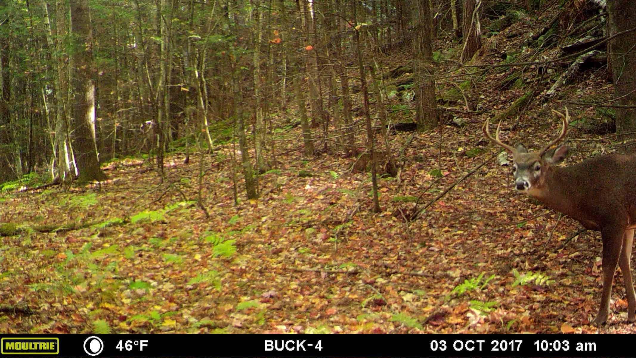 New Hampshire Hunting Season Update #3 - Redefining Success 1