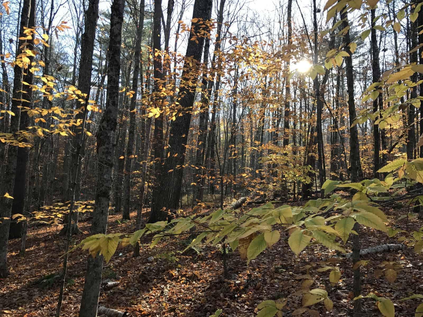 Fall Morning, New Hampshire