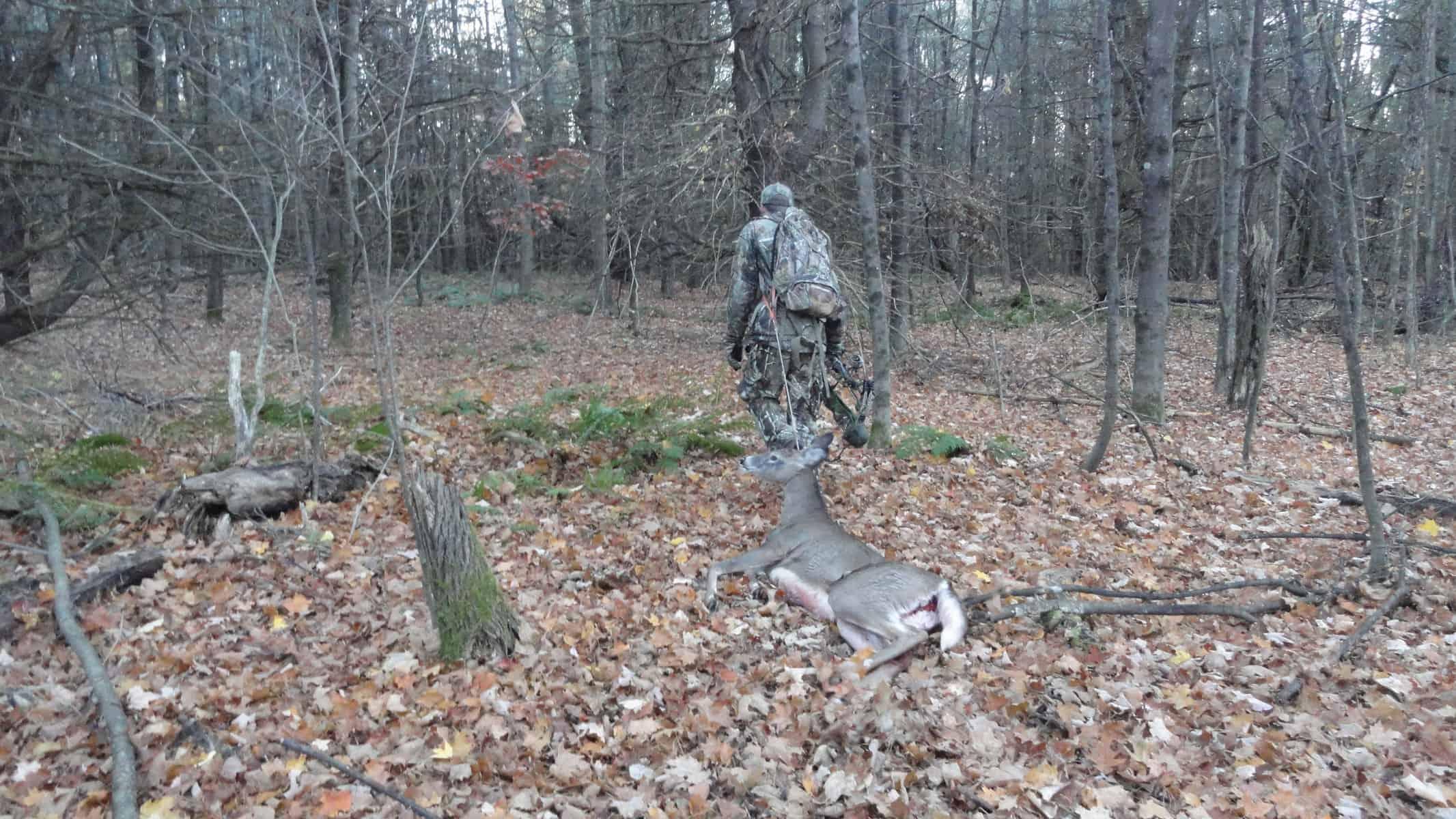 New Hampshire Archery Buck