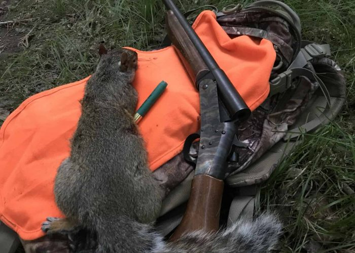 Squirrel Hunting & The Difference Between Seeing And Noticing