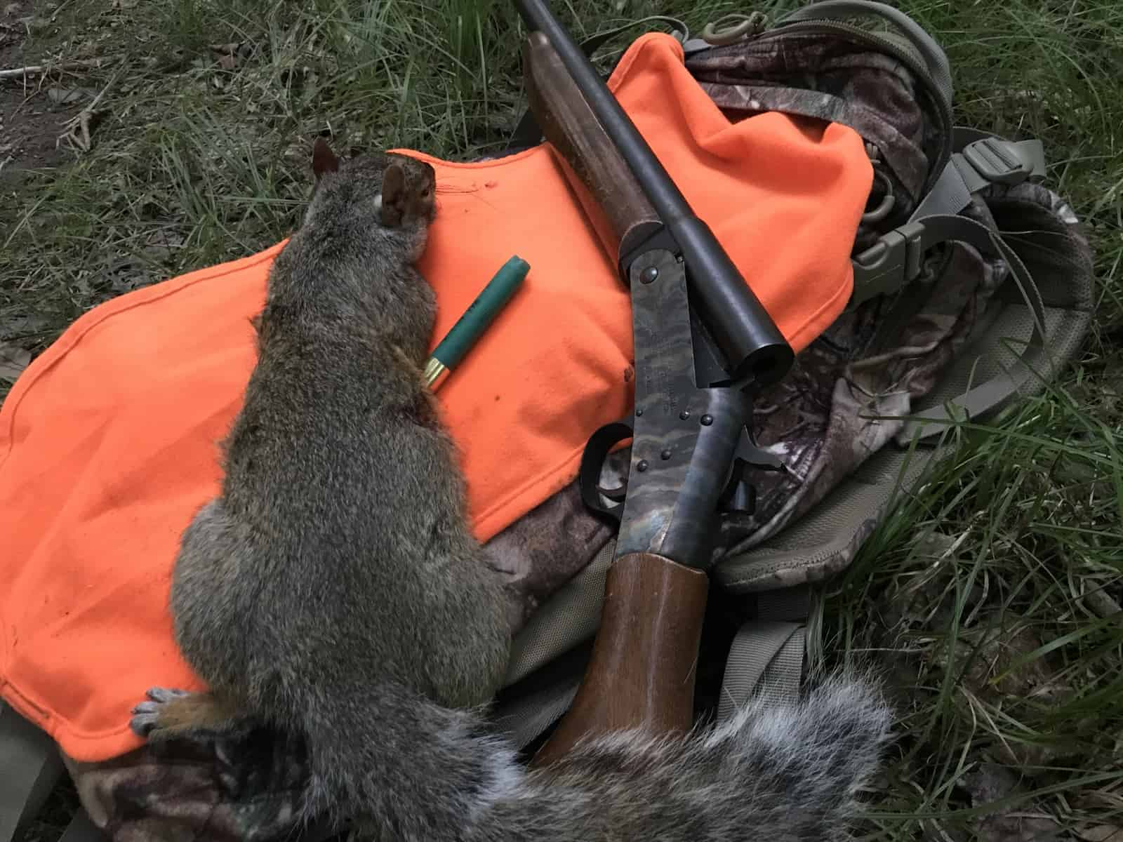 Squirrel Hunting & The Difference Between Seeing and Noticing 1