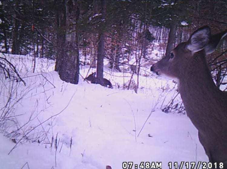 Deer, Deer Hunting, Vermont