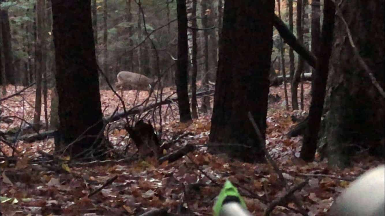 Muzzleloader hunting; Deer hunting; Deer