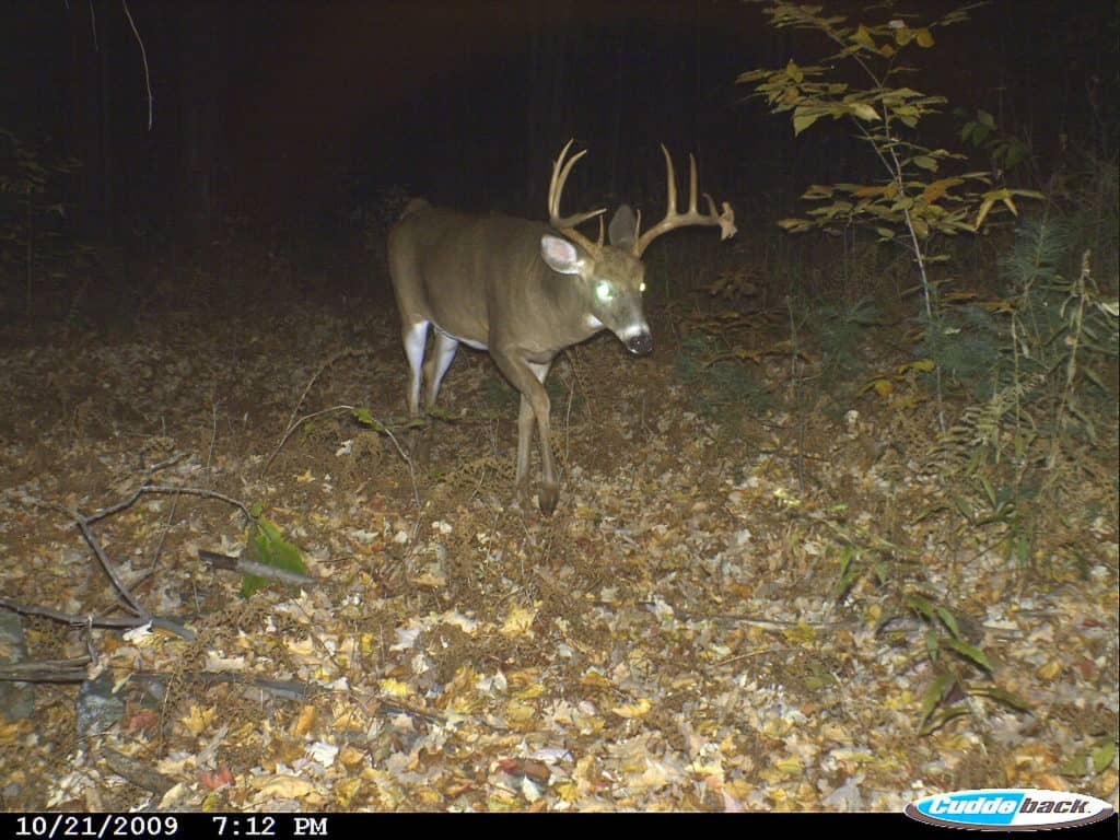 Buck, New New Hampshire, Deer Hunting, Deer Season