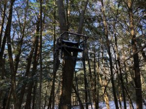 Tree Stand, Ladder Stand