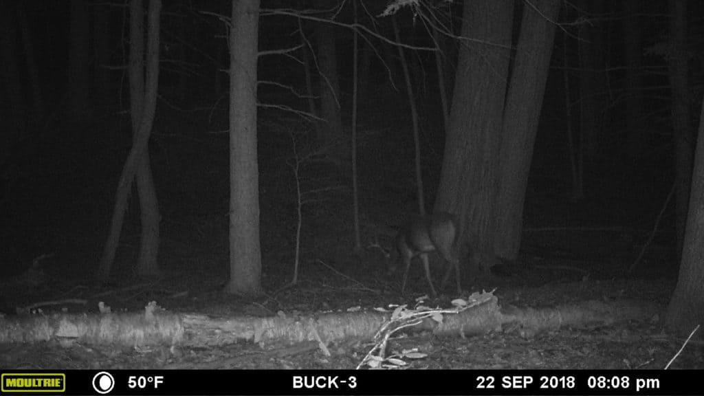 Deer Hunting, New Hampshire, Buck, Archery, Trail Camera