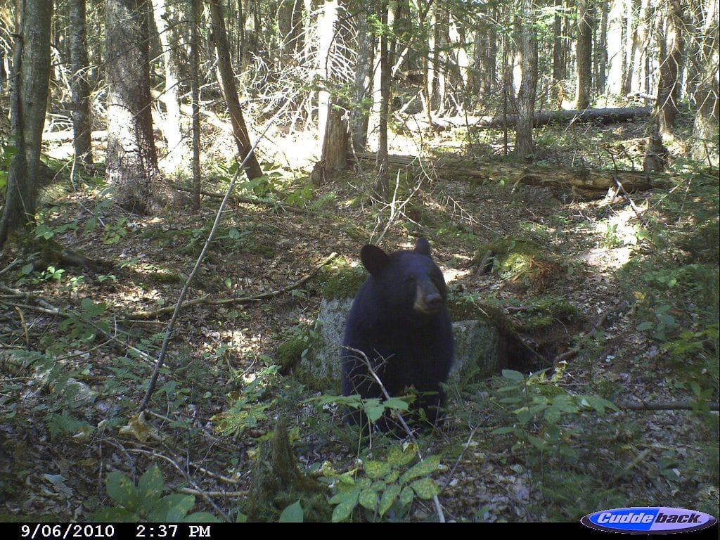Trail Camera, Hunting, Vermont, New  Hampshire, Archery, Rifle, Deer, Black Bear