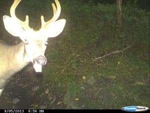 Deer, Trail Camera