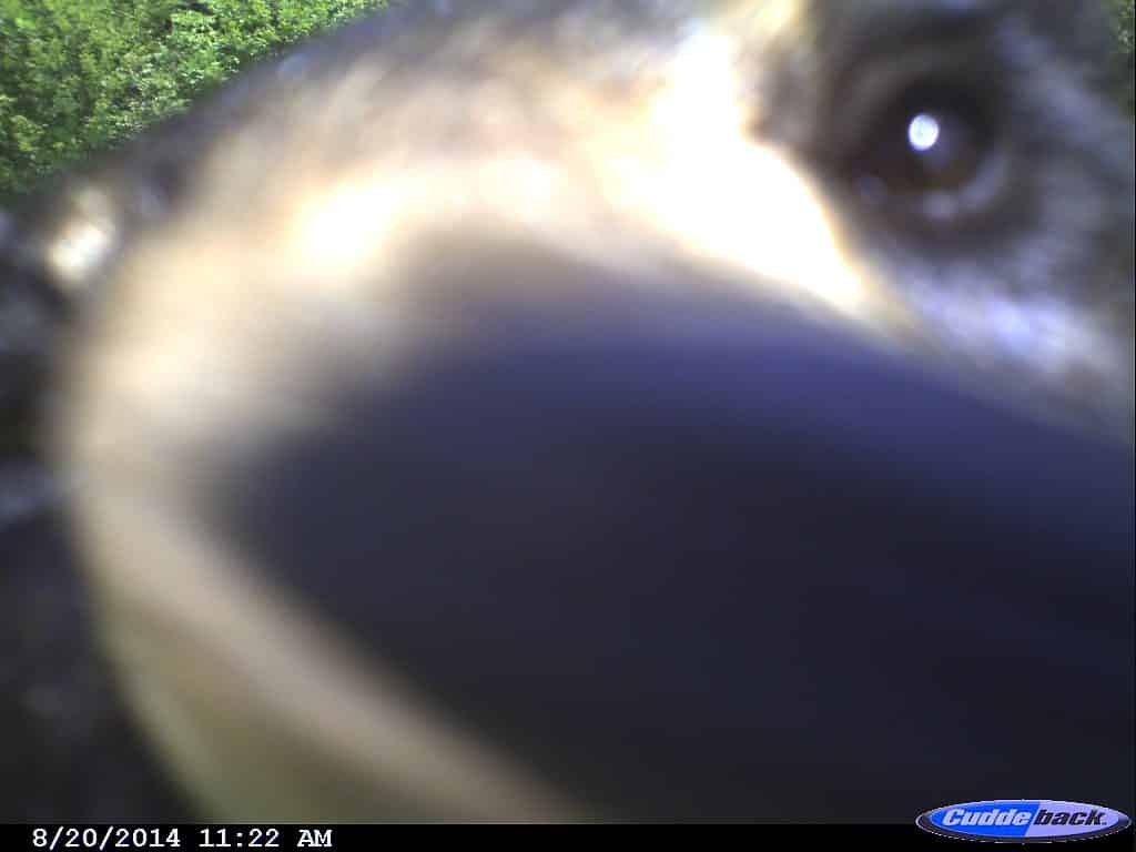 Trail Camera, Hunting, Vermont, New  Hampshire, Archery, Rifle, Deer, Black Bear