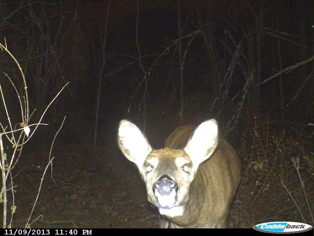 Doe, Deer,