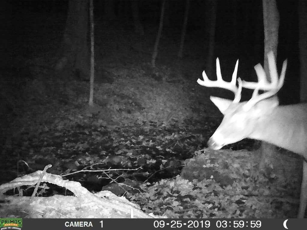 Buck, Vermont