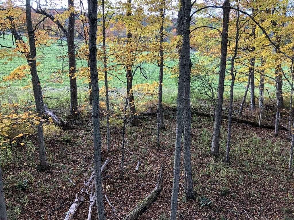 Vermont Archery, Deer Hunting