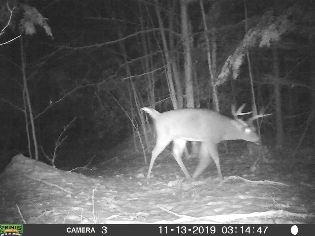 New Hampshire, Buck, Trail Camera
