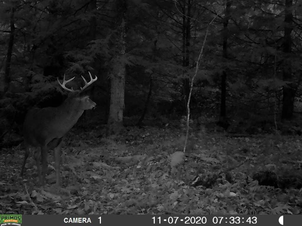 Trail Camera, New Hampshire