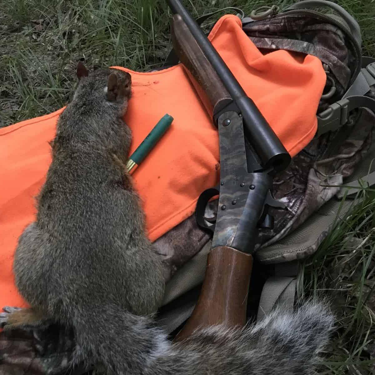 Gray Squirrel Hunting